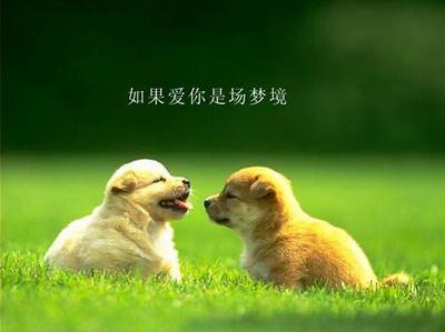 动物之间的爱情