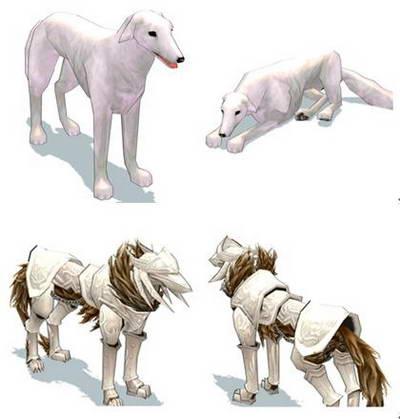 《洛奇》— g3s3会变身的帕拉丁宠物