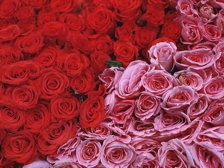 简单玫瑰花叠纸步骤图解