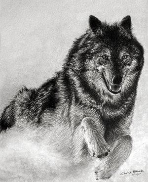 动物创意素描画